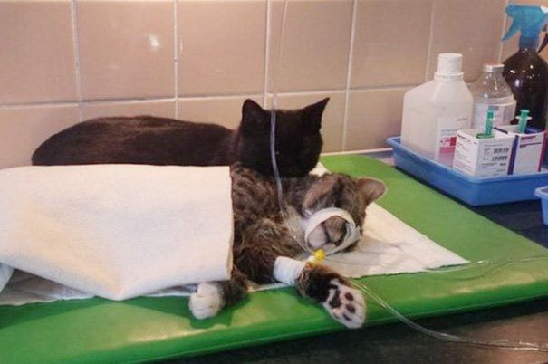 Radamenes cuida de outro gato