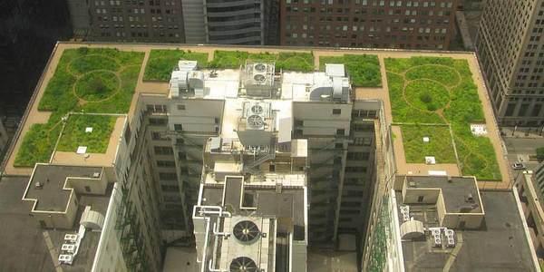 edificações tetos verdes