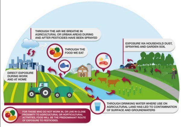 Uso de agrotóxicos e meio ambiente
