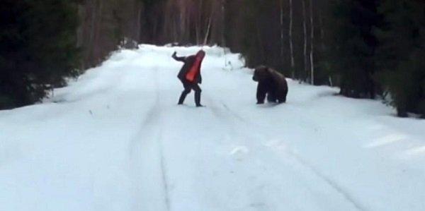 ataque urso