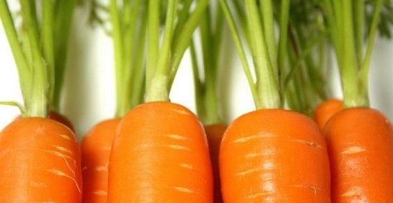 cenoura cultivar em casa