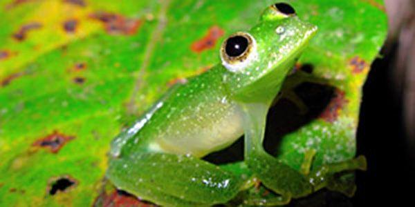 brasileiro biodiversidade