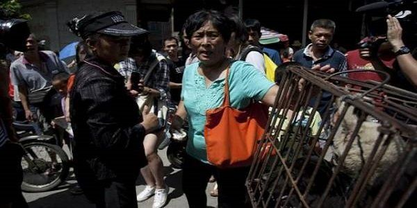 chinesa salvou 100 cães do Festival