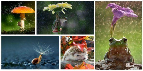 maneiras para se proteger naturalmente da chuva