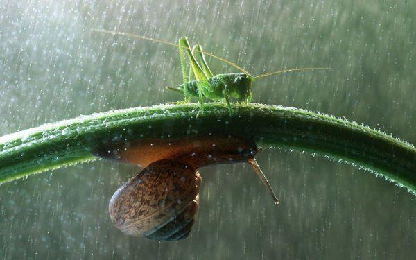 Animais se protegendo da chuva 7