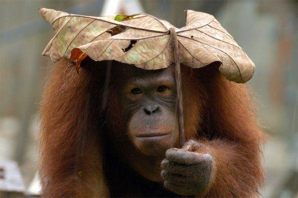 Animais se protegendo da chuva 6