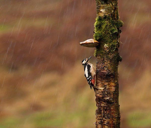 Animais se protegendo da chuva 10