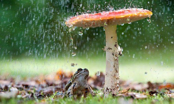 Animais se protegendo da chuva 9