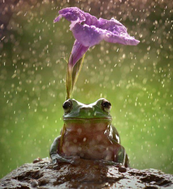 Animais se protegendo da chuva 11