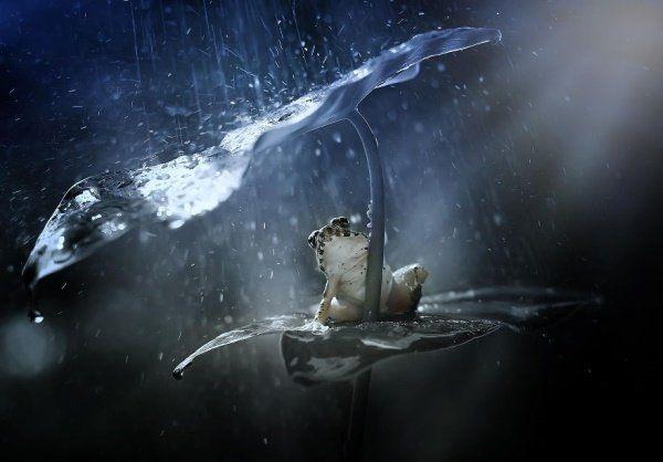Animais se protegendo da chuva 13