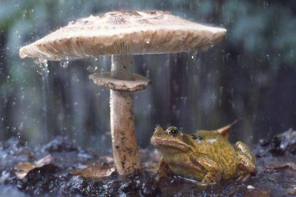Animais se protegendo da chuva 14