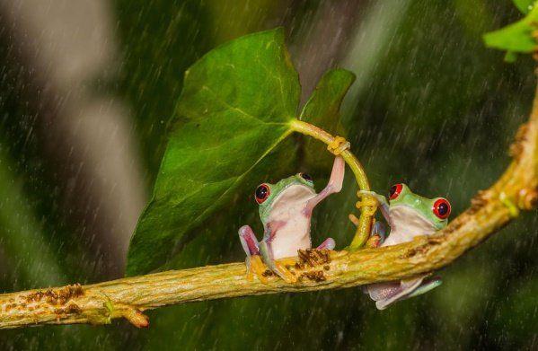 Animais se protegendo da chuva 15