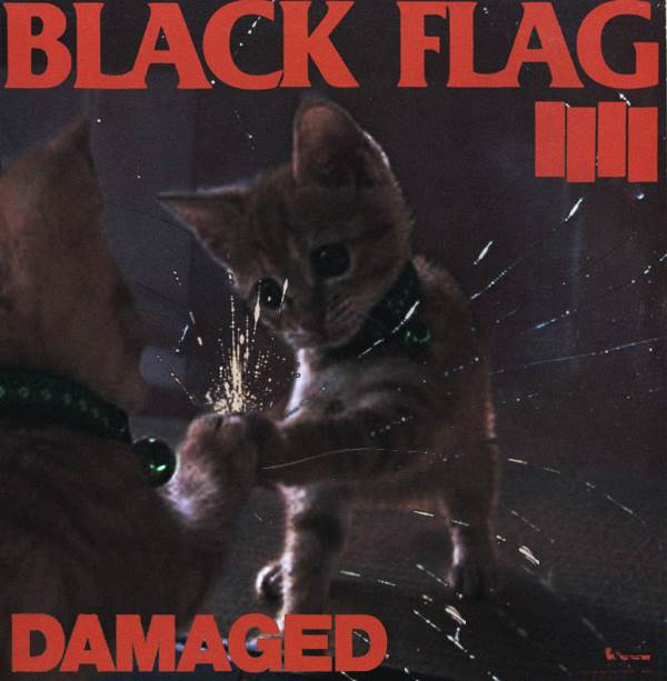 Black Flag gato