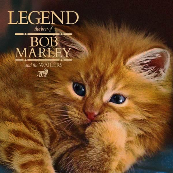 Bob Marley gato