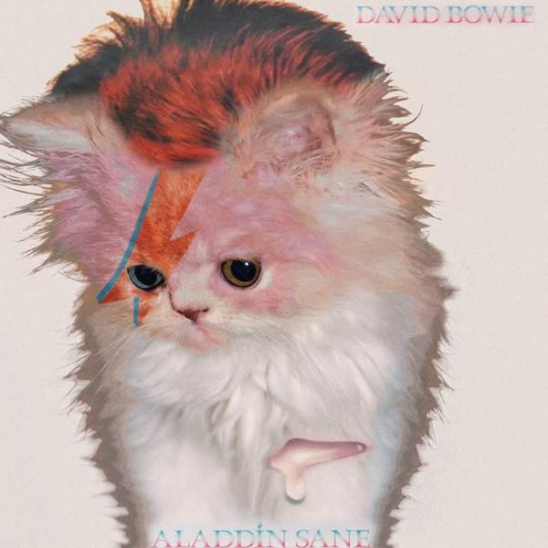 David Bowie gato