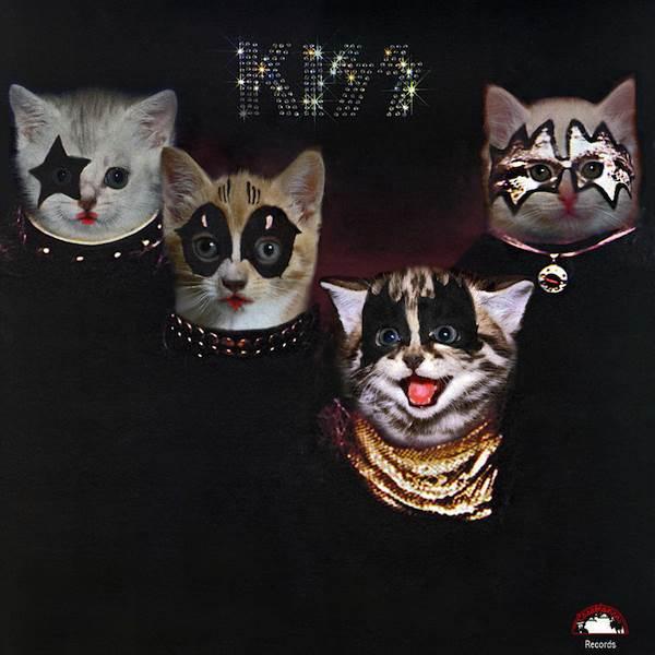 Kiss gato