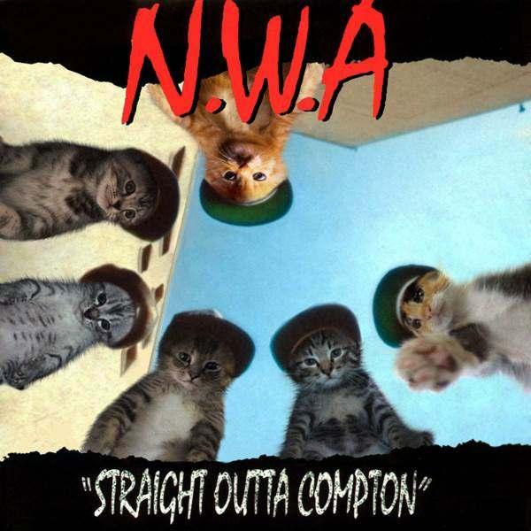 Niggas gato