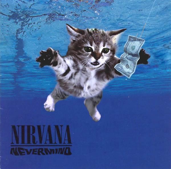 Nirvana gato