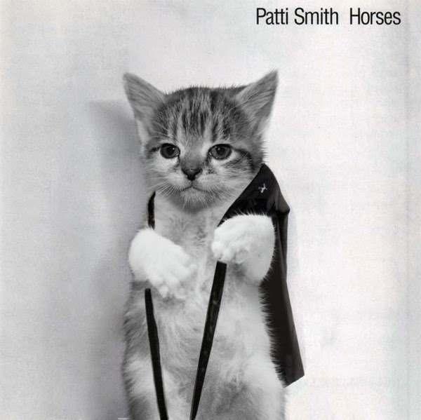 Patti Smith gato