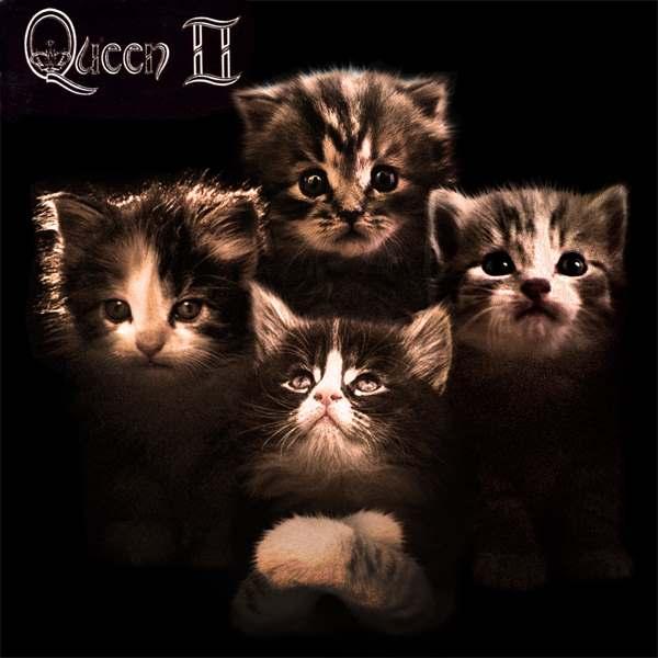 Queen gato