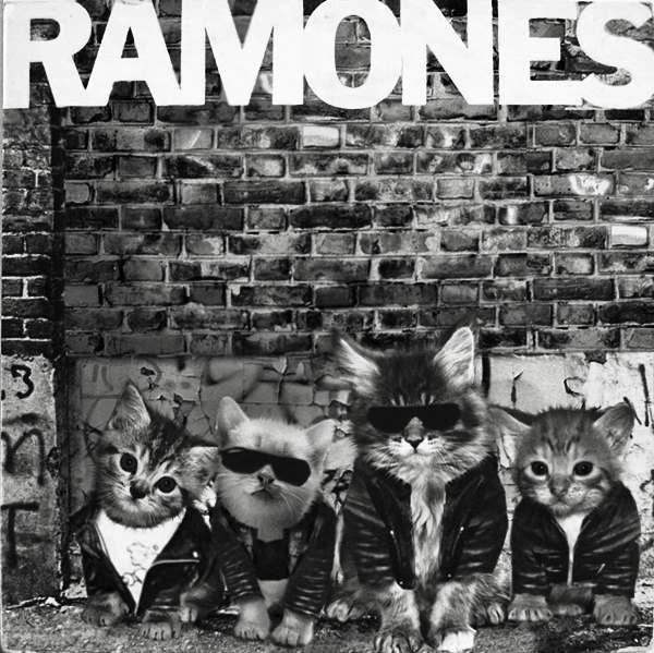 Ramones gato