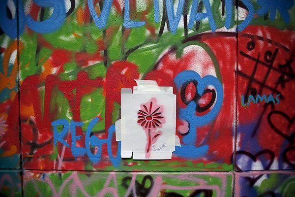 Lata 65 grafite 7