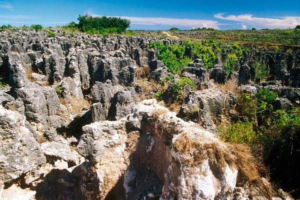 Nauru pináculos de calcários