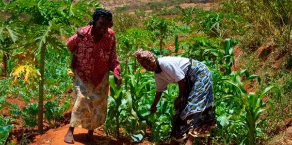 historias agricultores