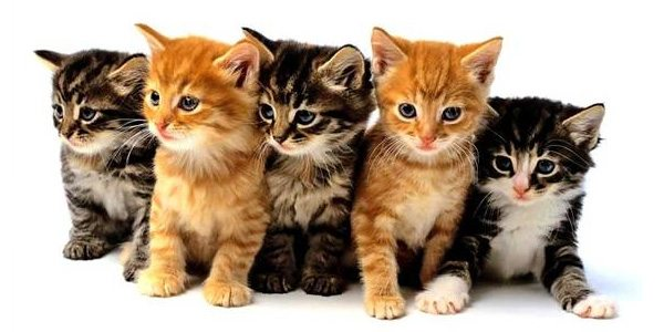 vídeo de gatinhos