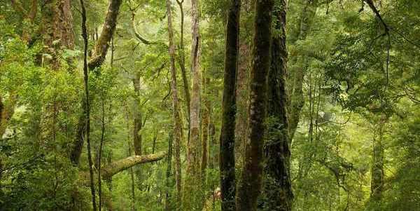 desastre ambiental na Tasmânia