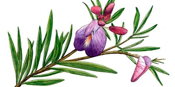 Livro grátis plantas medicinais