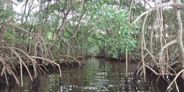 rio itanham manguezal