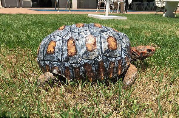 tartaruga impressa em 3d 5