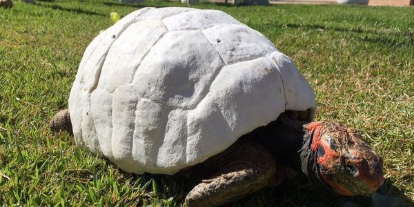 tartaruga-impressa-em-3d