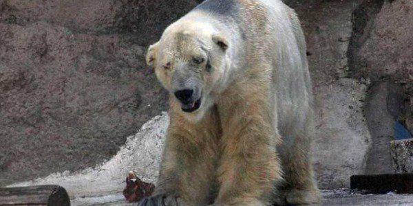 arturo-urso