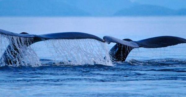 baleias-luto