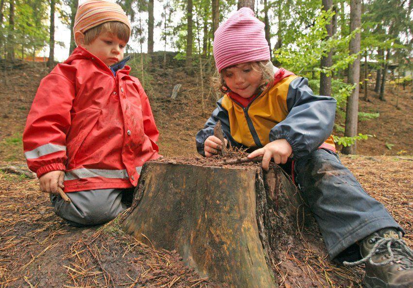 escola crianças floresta 4