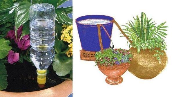 garaffa em vaso
