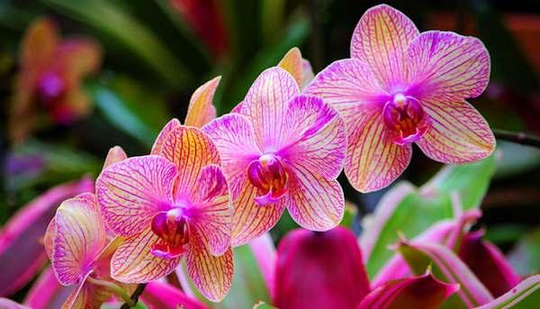 orquídeas-cuidados