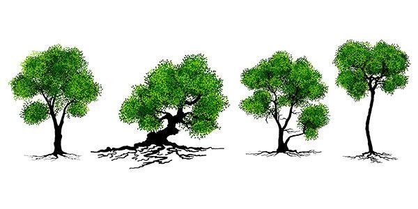 árvores-comunicam