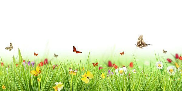Flores E Borboletas Jardim De Primavera E Renovação