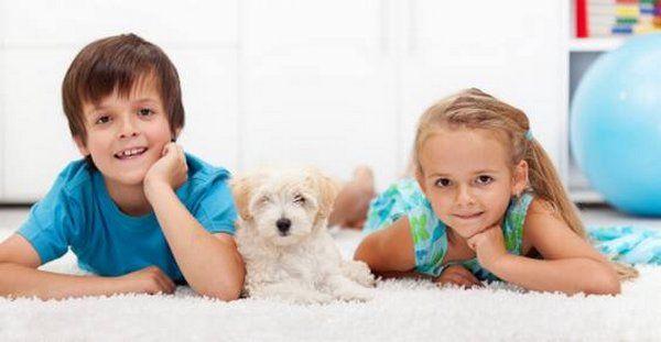 criancas e animais 3