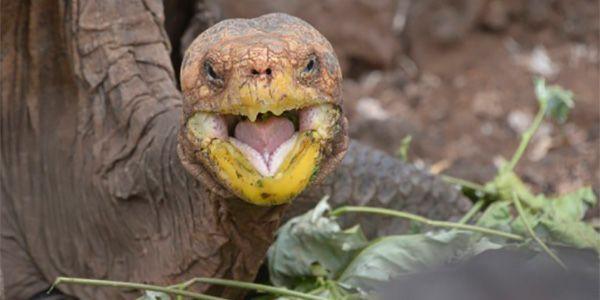 diego-tartaruga