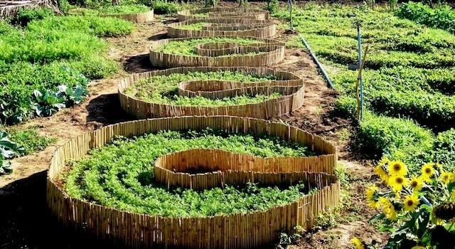 horta circular 2