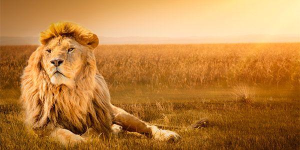 leoa leao
