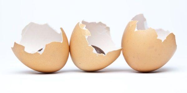 casca de ovo