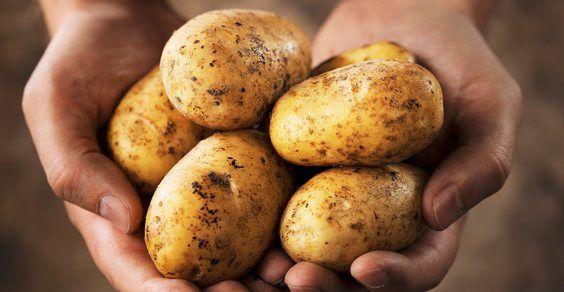plantar-batatas