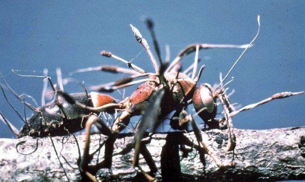 fungo pesticidas 2