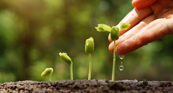 orgânicos-de-adubar