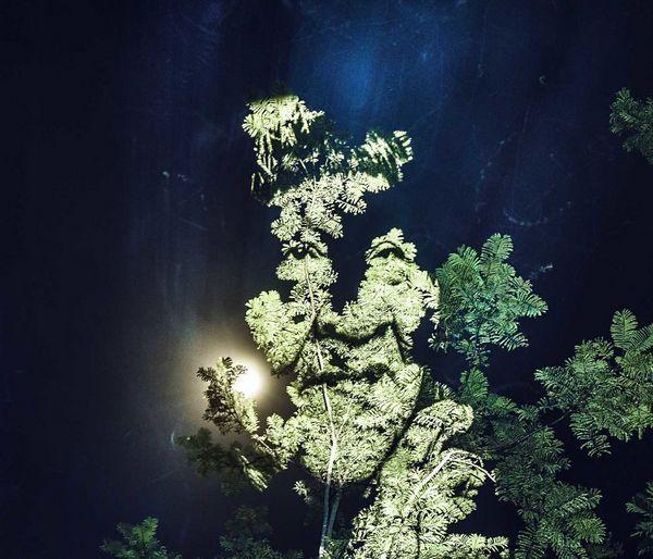 arte floresta 2